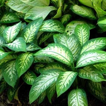 Plantas t xicas para perros debemos saber - Plantas venenosas de interior ...