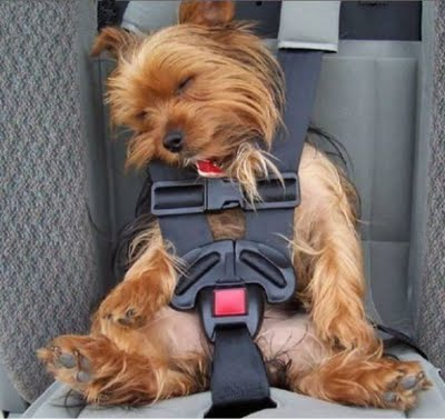 arnes seguridad perro auto
