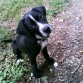 En uno de sus hobbies favoritos, salir al parque a jugar a correr mucho y a masticar hojas secas.