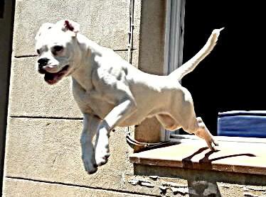 mi nena kon poko menos d un año saltando por la ventana