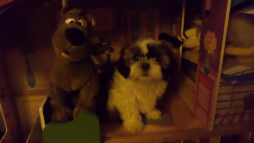 Noa en la casa de muñecas con Scooby Doo :P