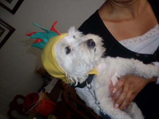 Mi Perro En halloween de pillito