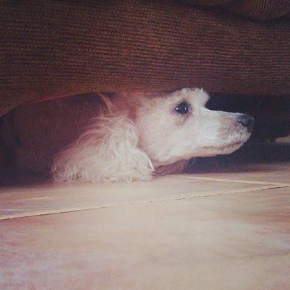 Su lugar favorito: bajo el sofá
