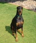 el perro lo compre ase 15 dias tiene3 años es buena dulse y juguetona aunque aveses se porte mal y es muy linda.                                        Abril.