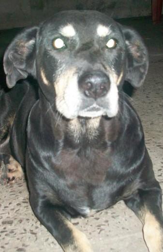 Ficha de Benny (Un perro de rochiCARP) | Perros.com
