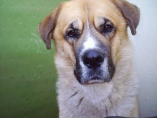 Un cachorrito de 12 años. ¿O es que no se le nota en la cara?