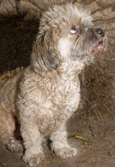 Lo encontramos en la calle a punto de ser atropellado y con una pata herida, ahora es un perro educado y feliz y extremadamente cariñoso y sociable :)