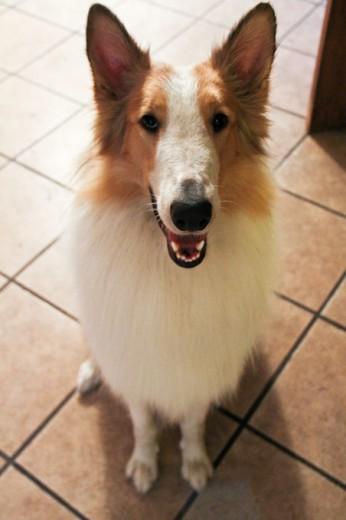 El es Bruno... el perro rockero :)