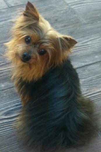 Mi perro - búho :p