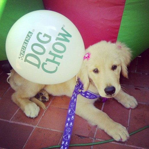K´La en evento canino en Guayaquil, Visita sus álbumes donde encuentran más fotos de ella