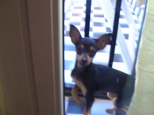 Aquí esta mi perrita en la puerta de mi terraza