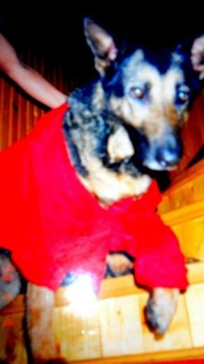 Hector recién bañado con su camiseta XXL ;)
