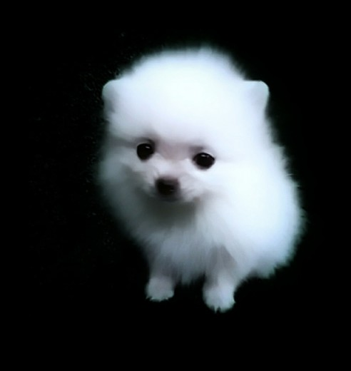 Esta foto es de mi futura mascota que esta por llegar      Aquí tiene 2 meses medio