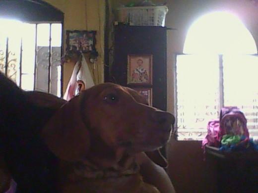 es mi perra la mami de harri