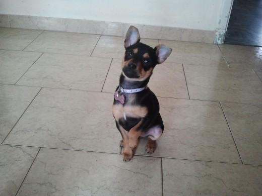 Ella es Minny hermosa cachorrita que llego a alegrarnos la vida. es un amor!!