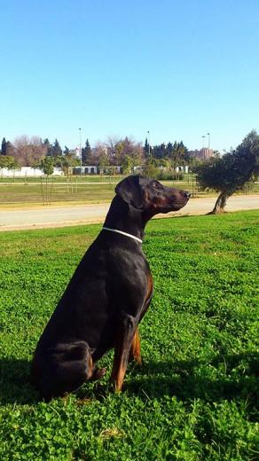 Neo en el parque