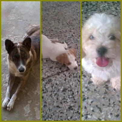 tigresa; Aaron y Rocky