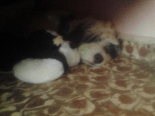 Spike durmiendo con su peluche gemelo:3