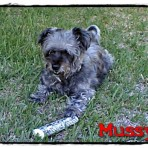 Mussy