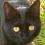 Luna (es una gata)