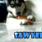 Saawyeer