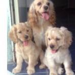 Angie, lucero & ellie