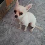 Mickye