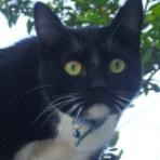 Ninja (Es un gato)