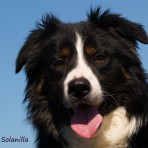 Llangwm Roy de la Solanilla