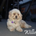 Willie (wily)
