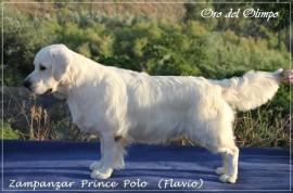 Zampanzar Prince Polo