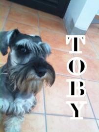 A.Toby