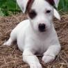 Terrier23