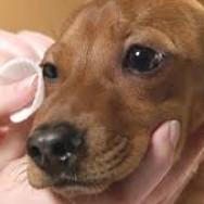 Limpieza de ojos de tu perro.